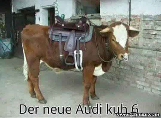 der-neue-audi-kuh-6
